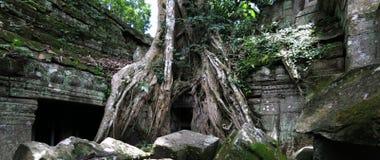 Temple de Ta Prohm, Cambodge Image stock