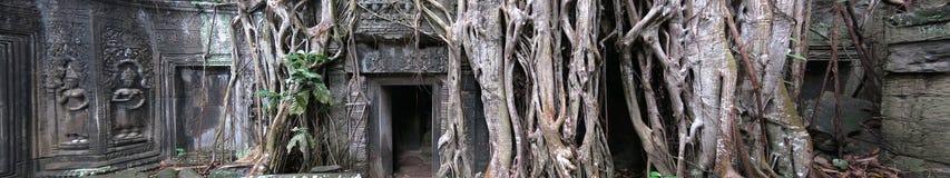 Temple de Ta Prohm, Cambodge Photo stock