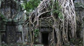 Temple de Ta Prohm, Cambodge Images stock