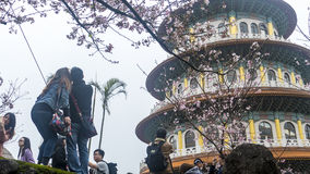 Temple de Tien-yuans avec des fleurs de cerisier à Taïpeh Photo libre de droits