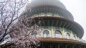 Temple de Tien-yuans avec des fleurs de cerisier à Taïpeh Photographie stock