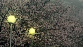 Temple de Tien-yuans avec des fleurs de cerisier à Taïpeh Image libre de droits