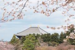 Temple de Todaiji à Nara avec les cerisiers de floraison image libre de droits