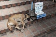 Temple Dogs Stock Photos