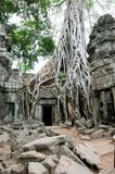 Temple doorway, Angkor Wat, Cambodia Stock Images