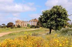 Temple du grec ancien de Selinunte Photo libre de droits