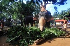 Temple elephant Stock Photos