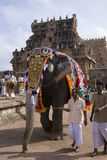 Temple Elephant - Thanjavur - Tamil Nadu - India stock image