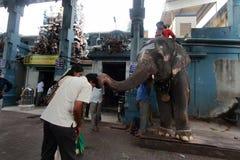 Temple elephants Stock Images
