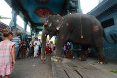 Temple elephants Stock Photo