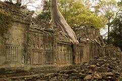 Temple et arbre de Preah Khan Image stock
