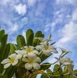 Temple-fleur en ciel de bleus Images libres de droits