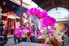 Temple garden flowers stock photos