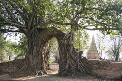 Temple gate. In Ayutthaya Province stock images