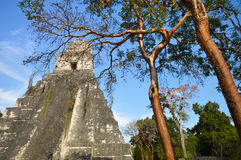 Temple I of the archaeological site of Tikal in El Peten, Guatemala Royalty Free Stock Image