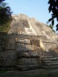 Temple of the Jaguar. Lamanai. Stock Photography