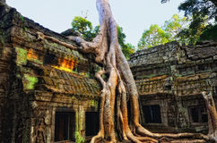 Temple in the jungle Royalty Free Stock Photo