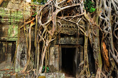 Temple in the jungle Stock Image