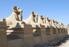 Temple of Karnak Royalty Free Stock Images