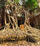 Temple Koh Ke, Cambodia Stock Photos