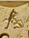 Temple of Kom Ombo, Egypt: carving of a small cat Royalty Free Stock Photography