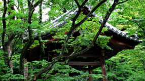 Temple in Kyoto, Japan. Temple in the Woods, Kyoto, Japan, vibrant greens Stock Image
