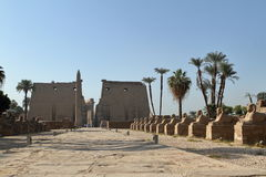 The Temple of Luxor in Egypt Royalty Free Stock Photos