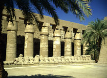 Temple in Luxor Stock Images