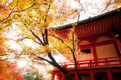 Temple maple Kyoto Japan Stock Photography