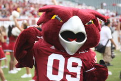 Temple Mascot, the Owl Stock Images