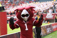 Temple mascot the Owl Stock Image