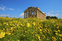 The temple and the nature. The temple of Selinunte in the yellow flowers Royalty Free Stock Image