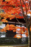 The temple near the maple tree. In Japan Royalty Free Stock Image