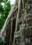 Temple overgrown with roots Royalty Free Stock Photos