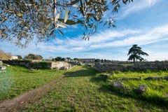 Temple of Paestum - Salerno royalty free stock image
