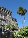 Temple with palm tree at Tulum in Mexico Stock Photography
