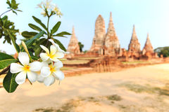 Temple Phra Nakhon in Ayutthaya, Thailand.  Royalty Free Stock Images