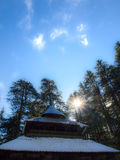 Temple in pine forest Royalty Free Stock Images