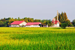 A temple in the rice field. Royalty Free Stock Photos