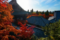Temple rooftops surrounded by fall colored red maple trees glowing in the autumn sun Stock Image