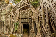 Temple ruins overgrown by trees Stock Photo