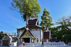 The temple of Sao Inthakin with dipterocarp tree Yang trees in the background, Chiang Mai - Thailand. Stock Photos