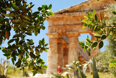 The Temple of Segesta (Sicily). The Temple of Segesta, one of the most perfectly preserved monuments to survive from Antiquity, stands in majestic solitude on a Stock Photo