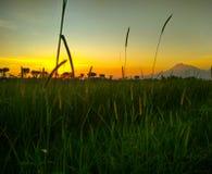Temple silhouet sunset nature. Sawah rumput hijau Stock Photography