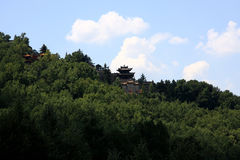 Temple surrounded by pine tree on mountain Royalty Free Stock Photo