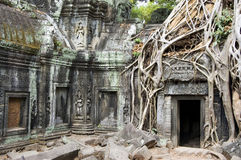 Temple Of Ta Phrom. Strong roots of a banyan tree growing through the ruins of the Ta Phrom temple at Angkor, Cambodia Royalty Free Stock Photo