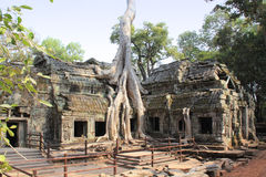 Temple Ta Phrom in Cambodia Royalty Free Stock Photography