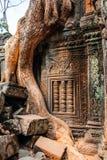 Temple Ta Prohm Royalty Free Stock Image