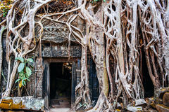 Temple Ta Prohm Royalty Free Stock Photos