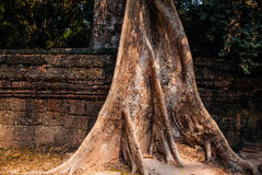 Temple Ta Prohm Stock Photography